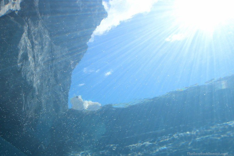 Polar bear looking down through the water at the Winnipeg Assiniboine Park Zoo