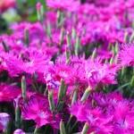 Flowers at the Winnipeg Assiniboine Park Zoo
