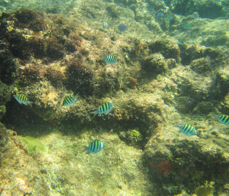 Anguilla Little Bay underwater with little fish