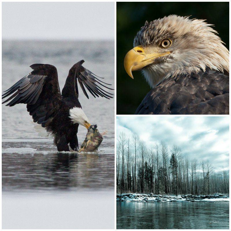 Eagle Float with Sunwolf in Squamish BC