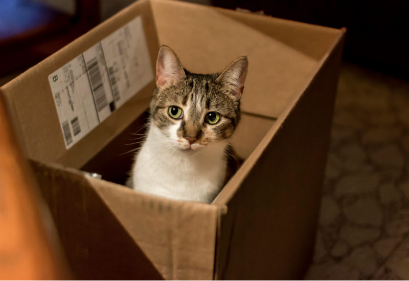 Things weve learned from Moving Often - cat in a moving box