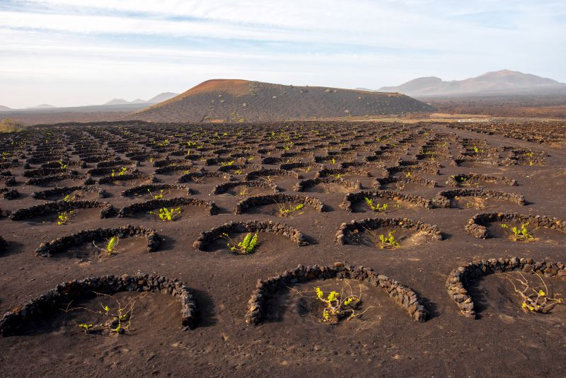 La Geria half circle Vineyards on Lanzarote