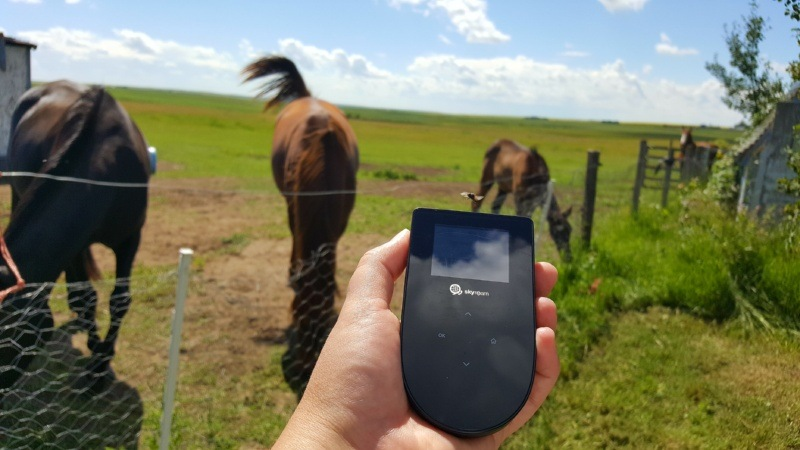 Tep wireless with horses in background