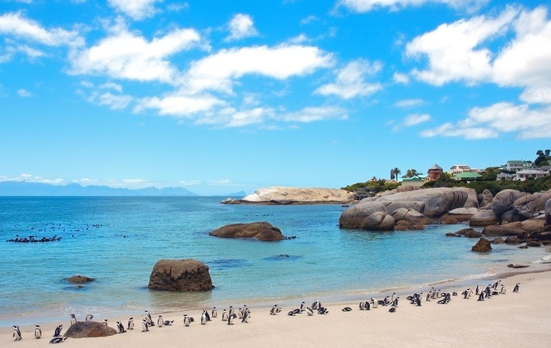 Endangered African penguins on False Bay's Boulders Beach in Simon's Town, Western Cape, South Africa.