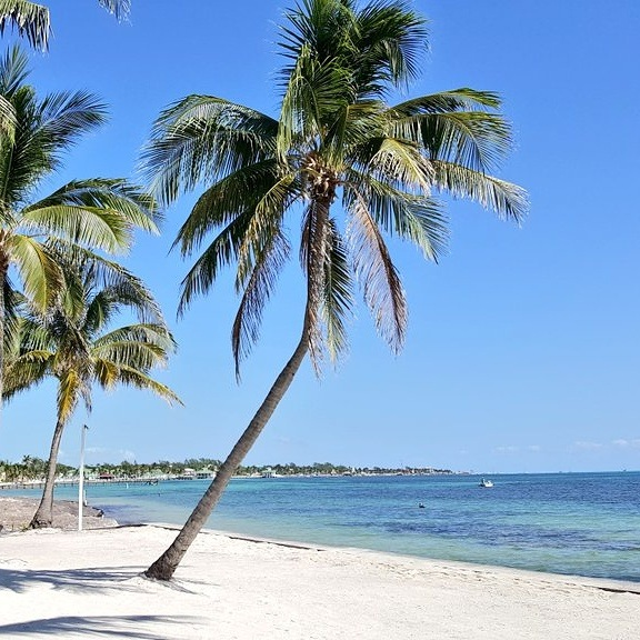 Beach and palm trees at Victoria House Ambergris Caye