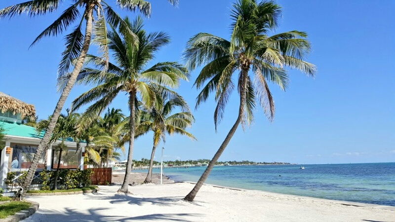 Beach and palm trees beside Admiral Nelsons Bar at Victoria House Ambergris Caye
