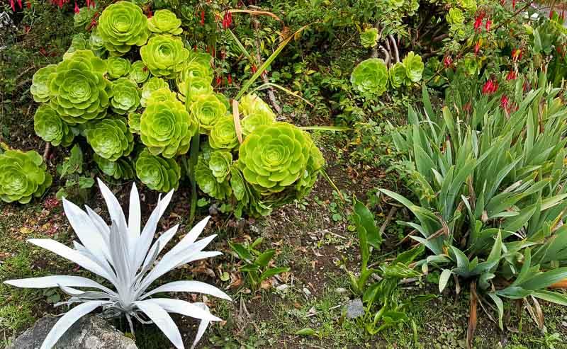 Lush vegetation at Termas Papallacta Hotel