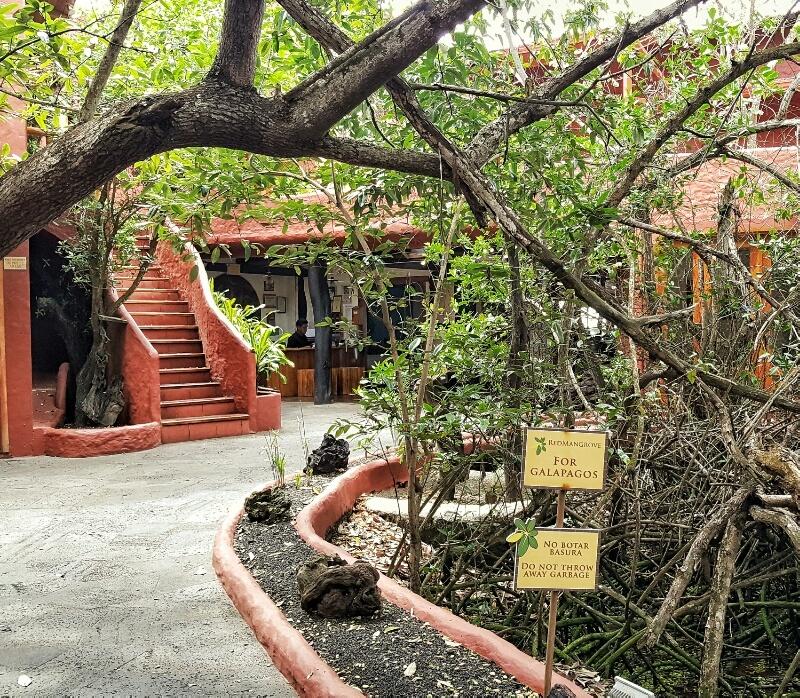 Red Mangrove Galapagos walkway