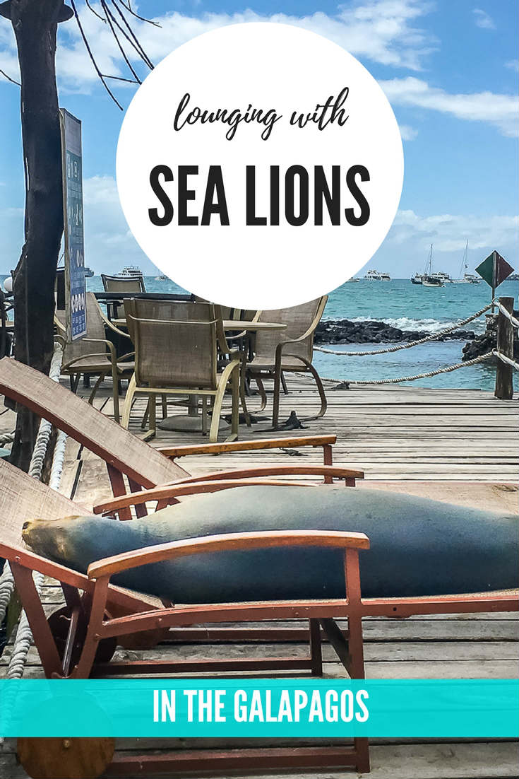 lounging with sea lions in the Galapagos