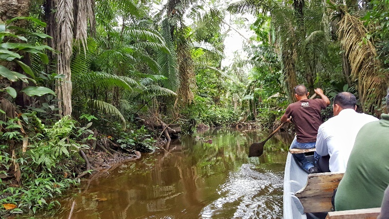 canoeing in the Amazon Jungle