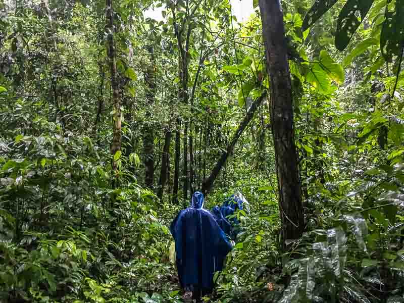 A rainy walk on an Amazon rain forest tour in the Amazon in Ecuador