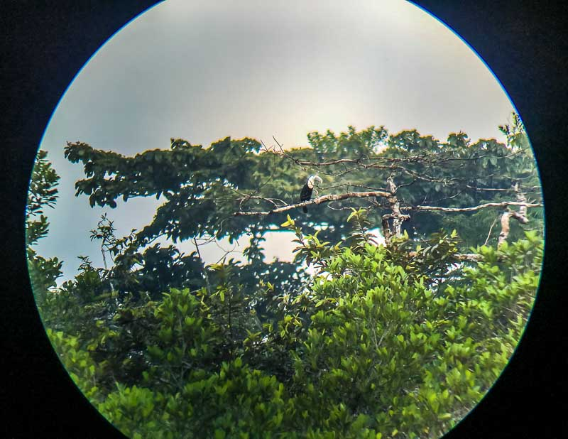 Looking at birds through binoculars at La Selva Lodge Amazon