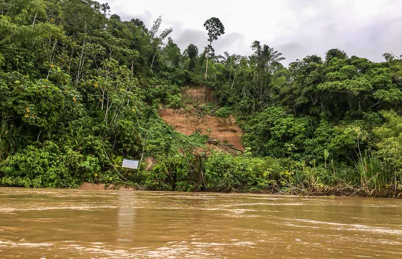 Parrot licks Yasuni National Park in the Amazon Rainforest in Ecuador