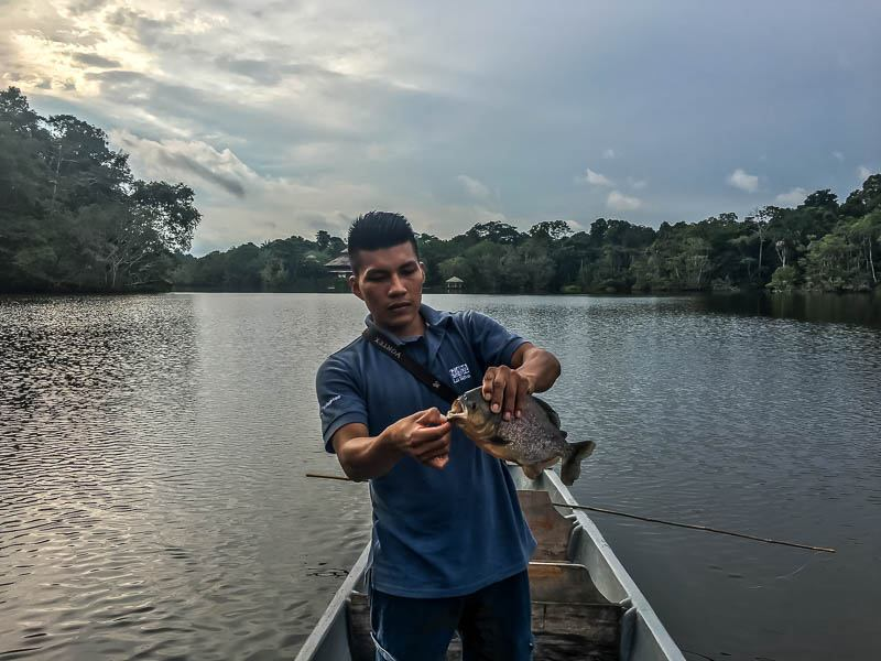 piranha fishing in the Ecuadorian Amazon
