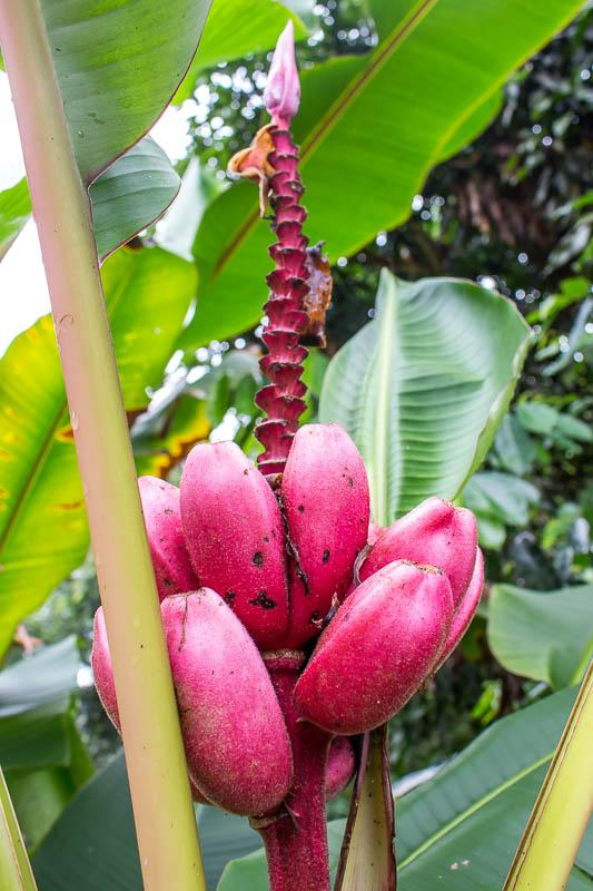 tropical plant in the Amazon rainforest in Ecuador