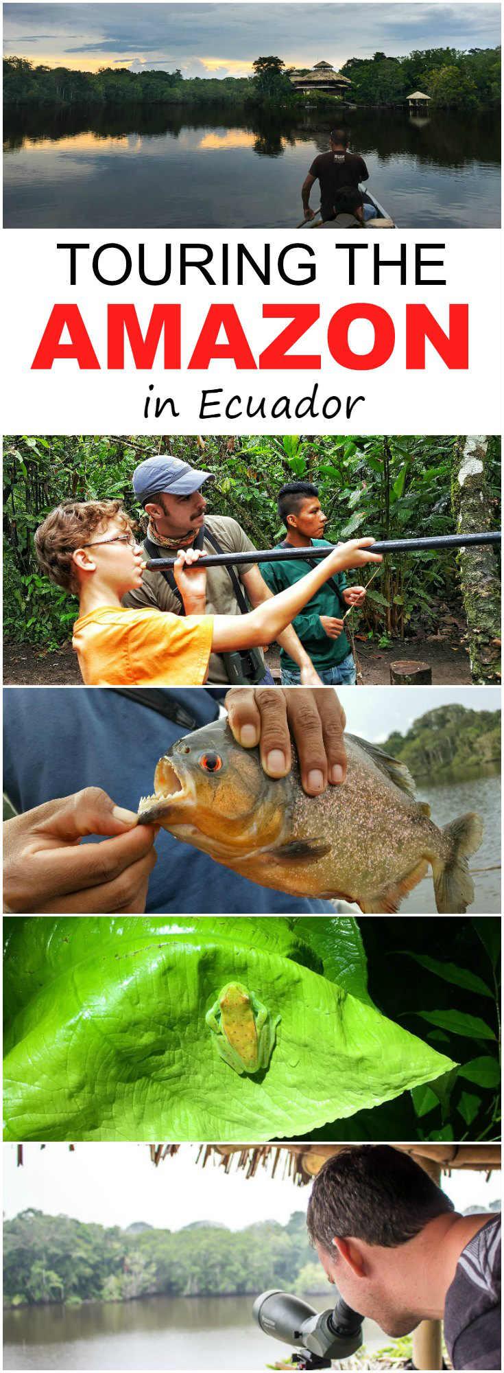 What To Expect On An Ecuador Amazon Tour With La Selva Lodge | Touring the Amazon in Ecuador | Ecuador Amazon rainforest | Ecuador Amazon Lodges | Ecuador Amazon tour | Ecuador Amazon jungle