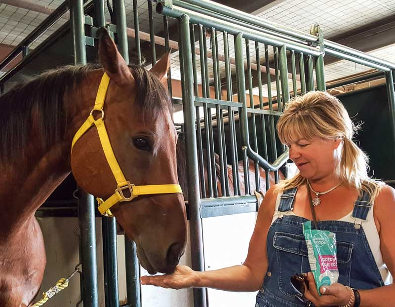 A little love and care behind the scenes for Troy Flad's horses at the Calgary Stampede