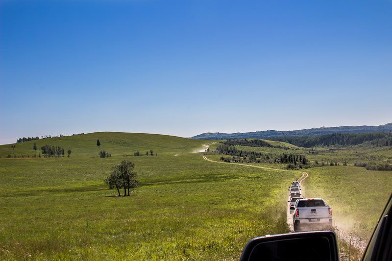 GMC convoy in cattle country