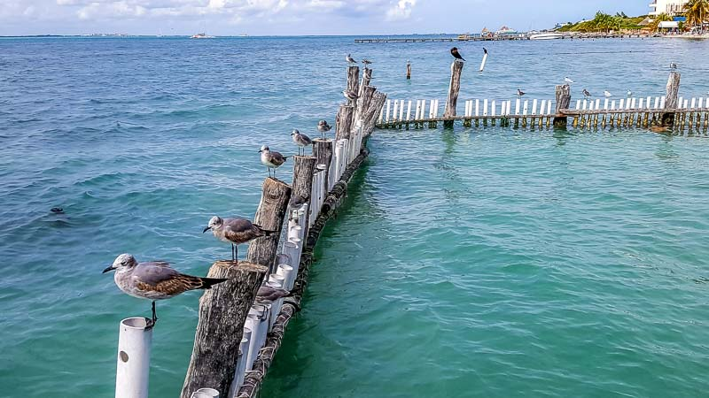Sea birds at Isla Mujeres