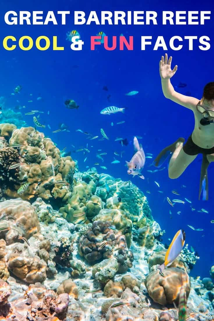 Cool and fun facts about the Great Barrier Reef in Australia boy snorkeling photo