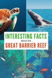 turtle, whale, coral, ocean Fun facts about Australia's Great Barrier Reef