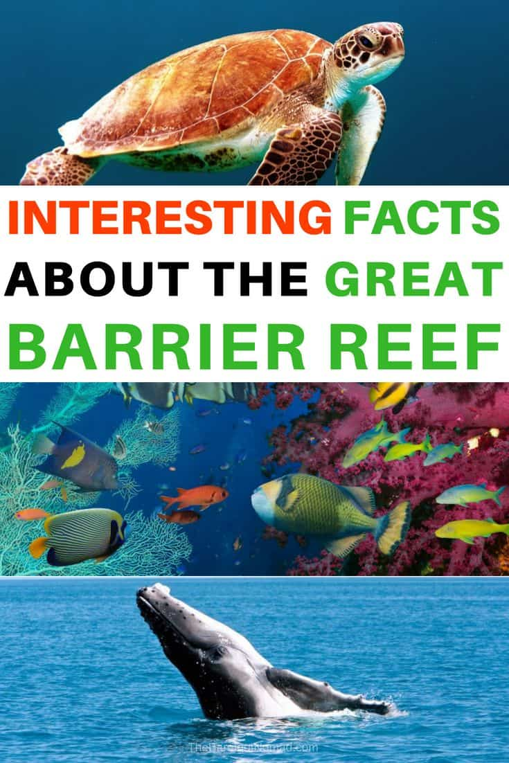Interesting Facts about the Great Barrier Reef turtle whale and coral