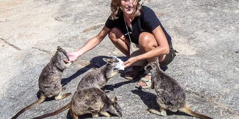 Rock wallabies in Australia