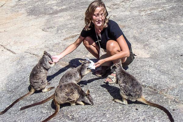 Rock wallabies in Australia