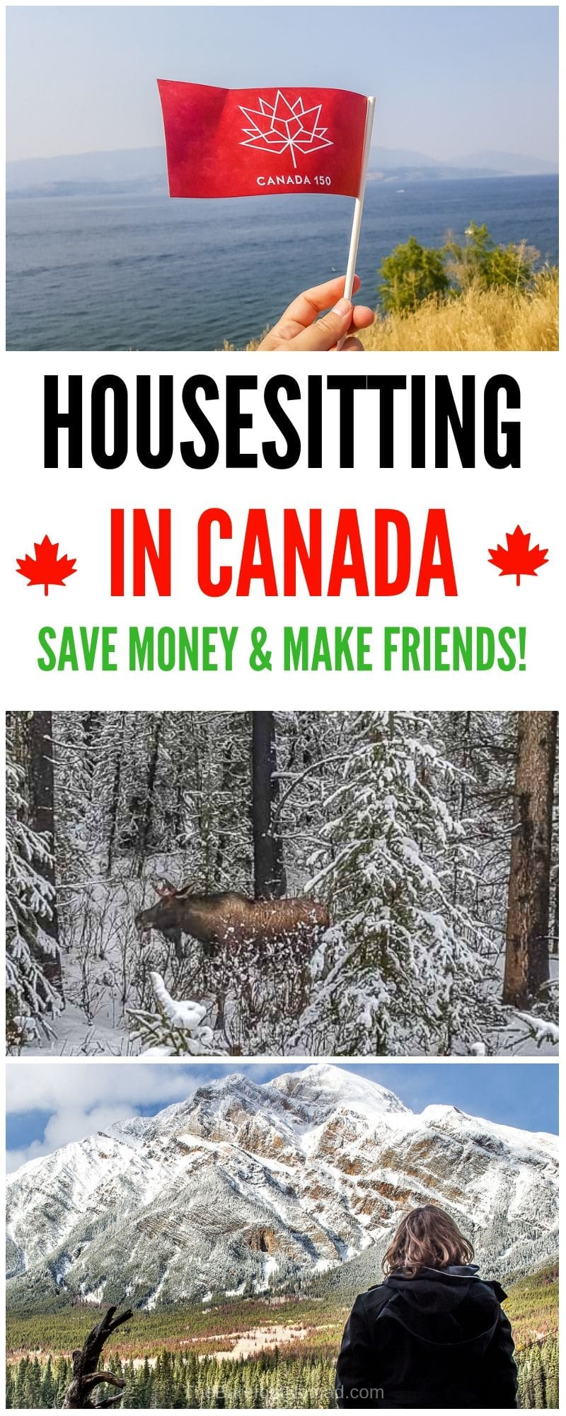 How to get a housesitting job in Canada. We share our best tips for how to get a great house sitting job!