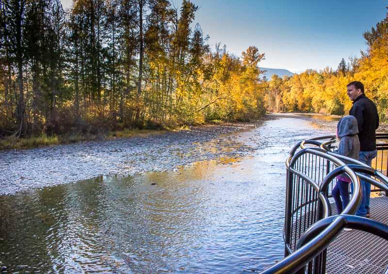 viewing platform at the Adams River at Tsutswecw Provincial Park British Columbia
