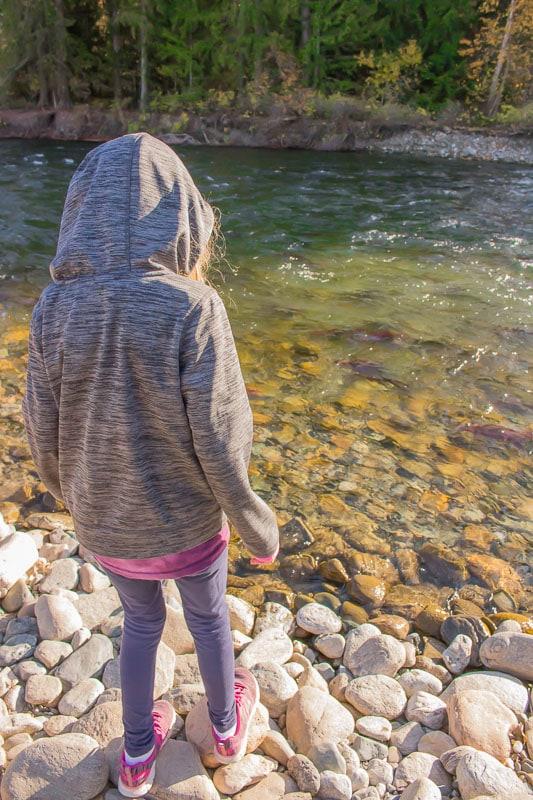 girl watching the Sockeye salmon run in Adams River British Columbia