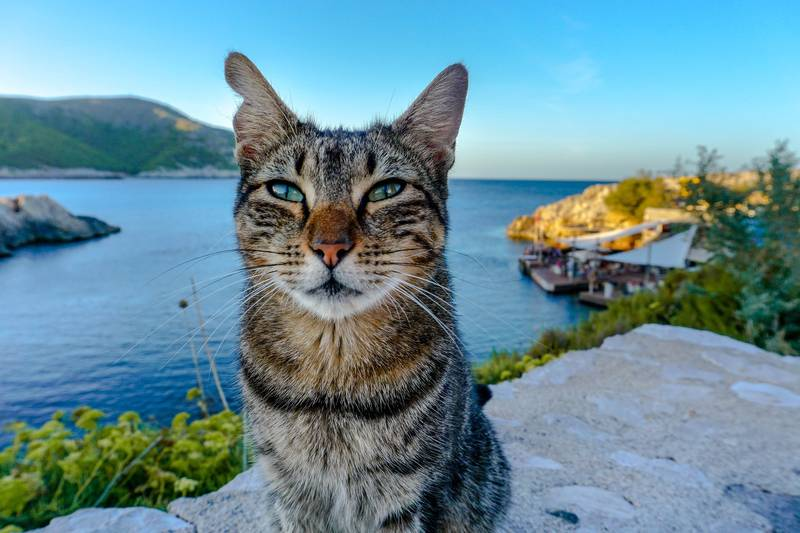 cat on the beach in Mallorca Spain