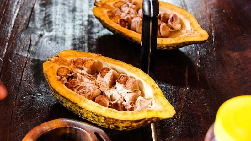 Inside a cocoa pod