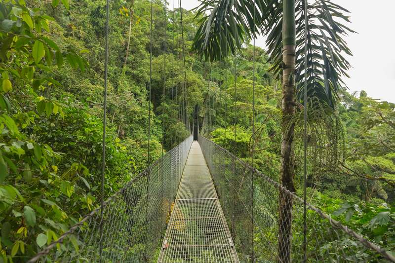 Monteverde Cloud Forest Biological Preserve hanging bridge in Costa Rica