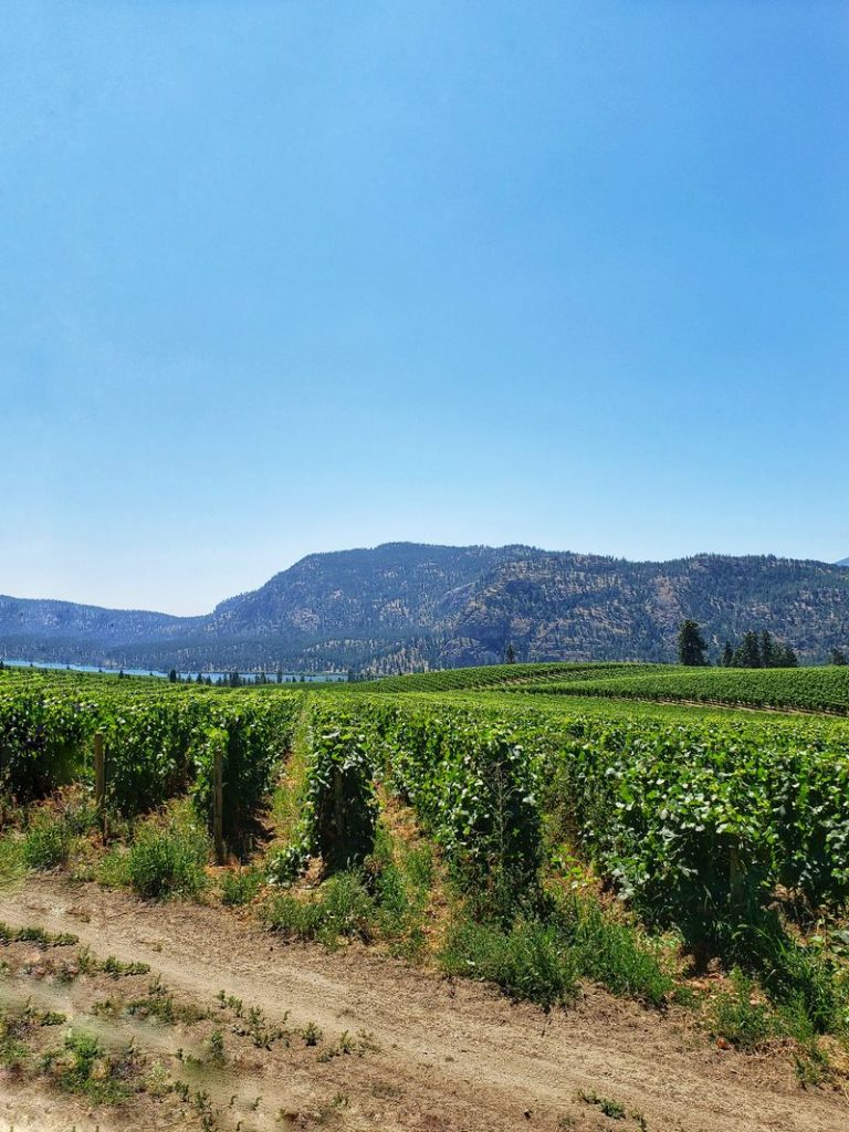View of a vineyard in Okanagan