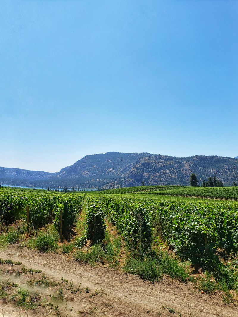 Overlooking vineyard in the Okanagan