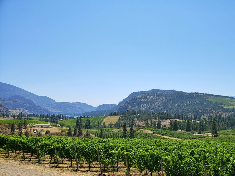 Overlooking liquid wines near Okanagan BC Falls