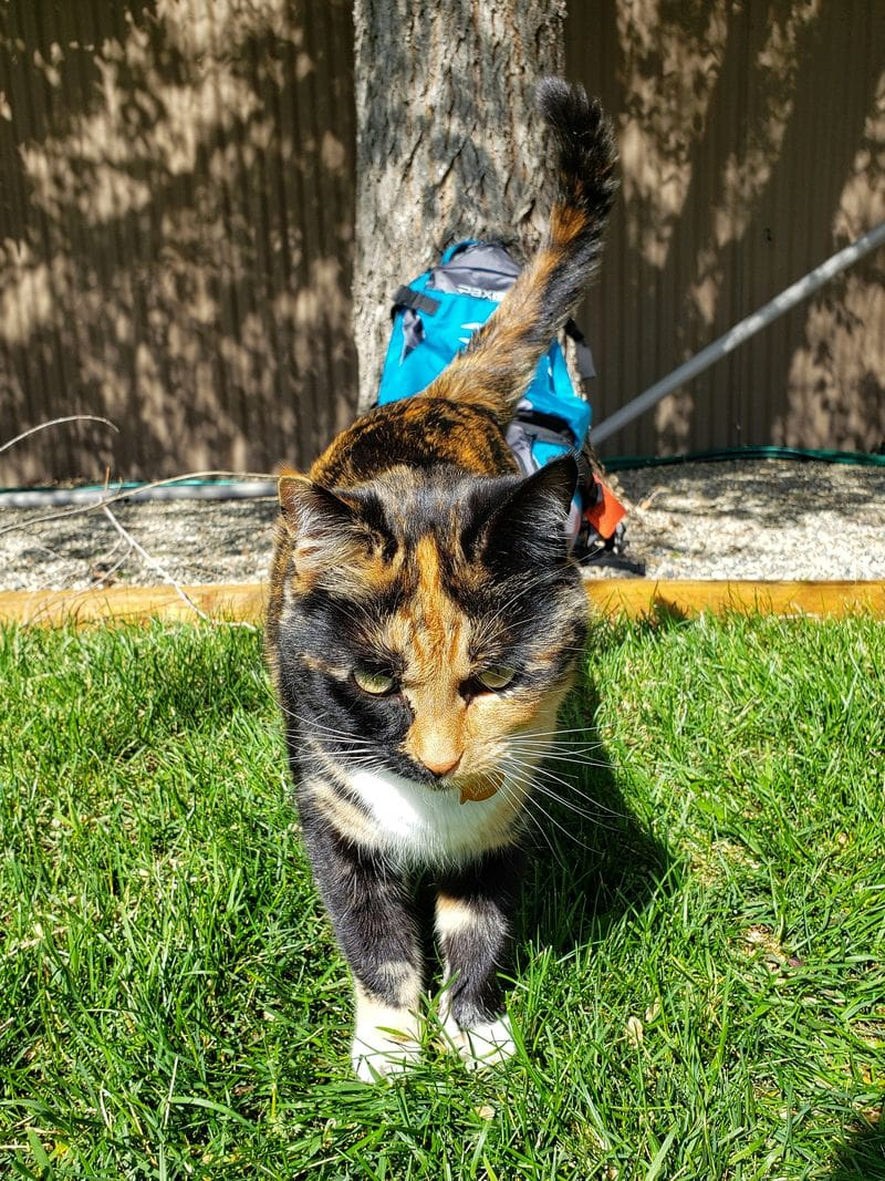 calico cat helping review Paxis swing arm backpack