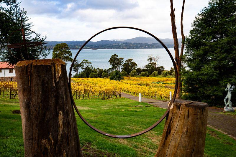 Winery Vineyard in Tamar Valley Tasmania Australia DP